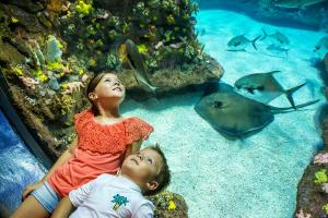NC Aquarium at Ft Fisher - Kids look thru bubble