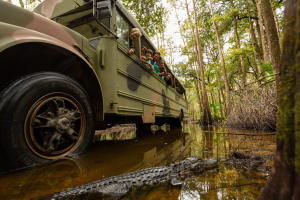 Photo of Babcock Eco Tour Bus in swamp with family looking at alligator