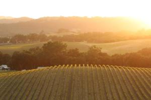 Opolo Winery Sunset_credit Maryann Stansfield.jpg