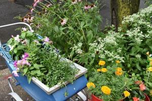 Brooklyn Botanic Garden - Greenest Block contest