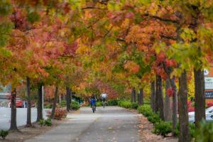 Trees with changing leaves on the Interurban Trail