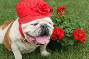 Garden Dawg