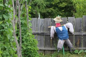 Scarecrow at GCVM