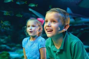 SEA-LIFE-Grapevine-Aquarium-Texas1
