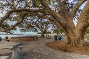 Neptune Park Picnic Area
