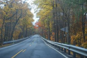 The road near Newville passes through a forest of golden autumn leaves.