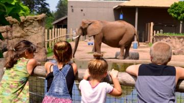 Elephant at Seneca Park Zoo