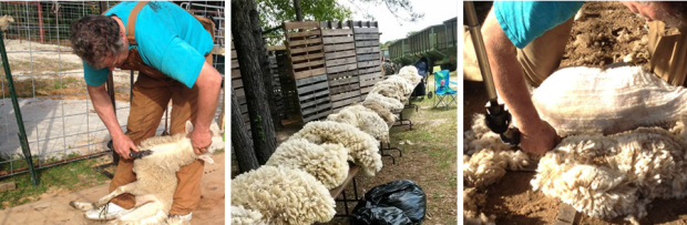 Wool Days @ CM Farms