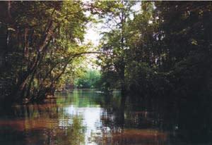 Westlake River