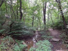 Mechanicsburg Trails & Trees