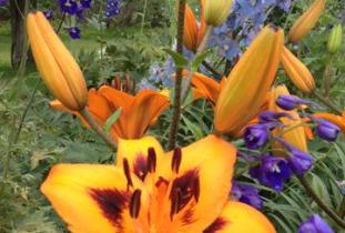 Beausejour Daylily Gardens