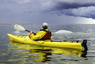 kayaking with belugas