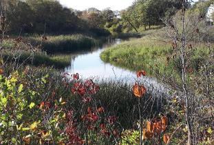 Netley Creek