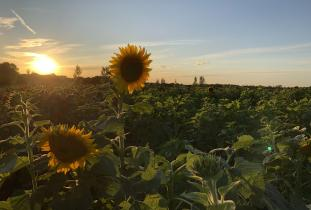 Sunflower Expo