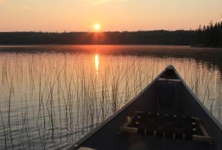 canoe in reeds