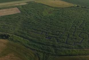 King Korn Maze