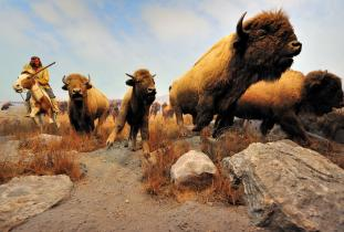 Manitoba Museum - Bisons