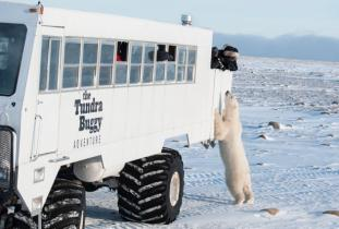 The Tundra Buggy Adventures