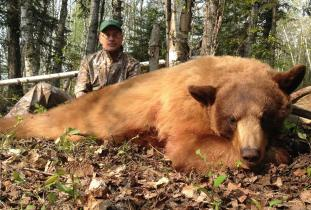 Agassiz Outfitter, black bear hunting