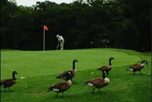 Lundar Co-op Golf & Country Club