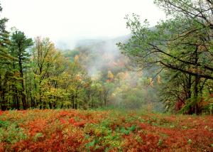 Leaves change from shades of green to golds and reds at Kings Gap State Park.
