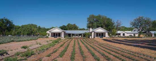 Los Poblanos Lavender Farm