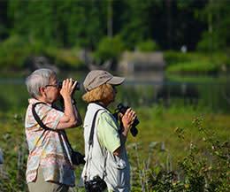 Huntley Meadows Park Birding/Birdwatching