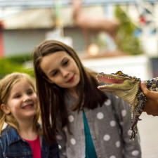 zooamerica-alligator-family-fun