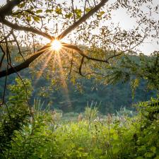 wildwood-park-harrisburg