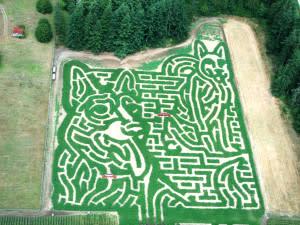 Rutledge Corn Maze LLC
