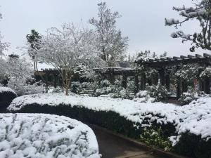 botanical gardens (snow)