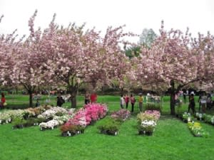 Brooklyn Botanic Garden plant sale