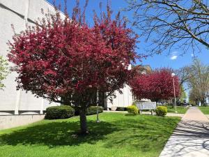 Schweinfurth Art Center