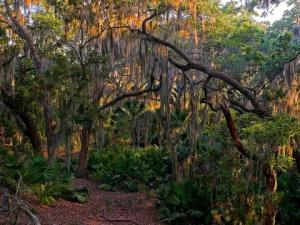 Maritime Forest on Little St. Simons Island