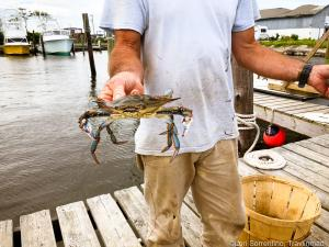 Blue crabs, Outer Banks, North Carolina