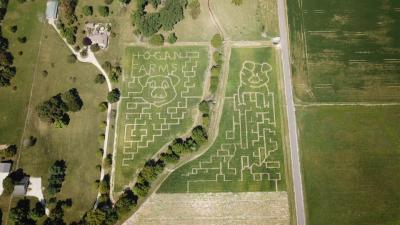 Hogan Farms Corn Maze 2019