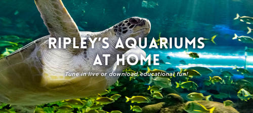 Ripley's Aquarium At Home