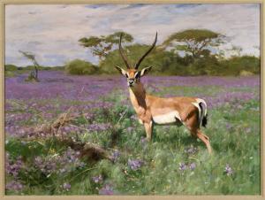 Grant's Gazelle Kuhnert