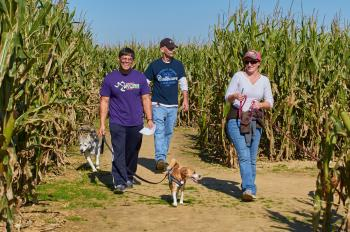 Dog Daze at the Maze