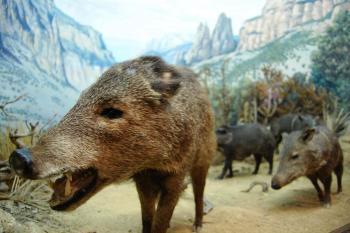 Delaware Museum of Natural History - Diorama