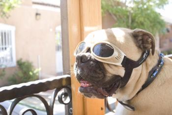 Dog on ABQ Trolley
