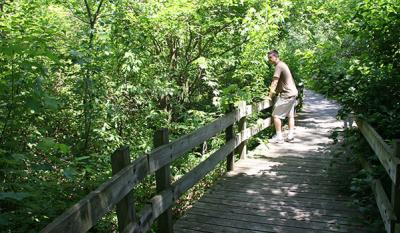 Gibson Woods Nature Preserve