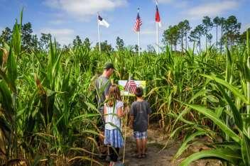 Gallberry Corn Maze