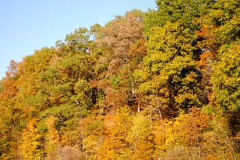 Burnett Woods is a hidden gem of Hendricks County that shines brightest in autumn.
