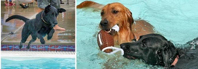 Dogs play with a ball in the pool at the College Hill Pool during an event