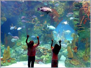 Albuquerque aquarium by jeff greenberg