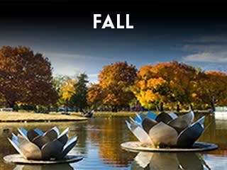 Seasons - Fall Widget