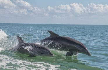A Frisky Sunset Scenic Bay Dolphin Tour