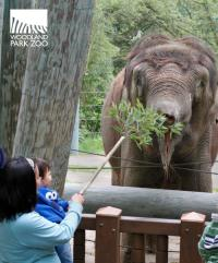 Summertime at the Woodland Park Zoo