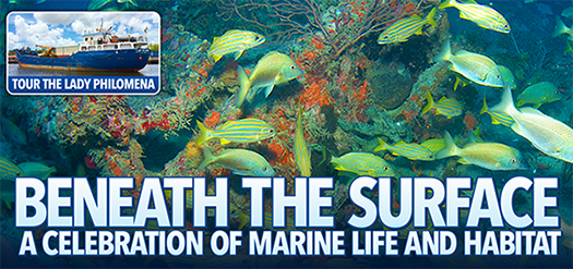 Learn more about Volusia County's artificial reef program!